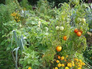 Jardiner, quand on n'a pas de jardin, c'est possible !