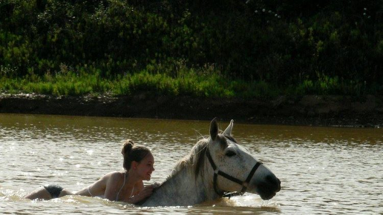 Pferde_Tamera