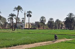 La urbanización amenaza la seguridad alimentaria en Medio Oriente