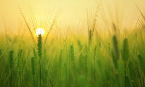 Préserver notre patrimoine pour sauver l'agriculture durable
