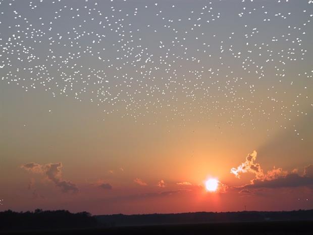 Βραδιά αστροπαρατήρησης στην Ιεράπετρα