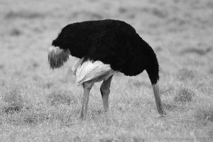 Réponse au gouvernement français : La politique de l'autruche