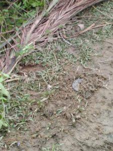 Amnesty: l'esercito di Myanmar colloca mine antipersona sul confine del Bangladesh