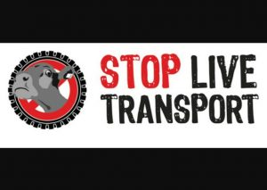 """Weltweiter Aktionstag gegen Lebendtiertransporte: """"Stop Live Transport"""""""