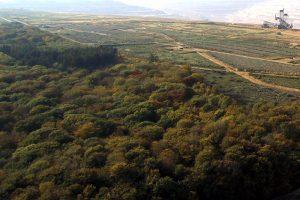Eilverfahren gegen RWE: vorläufiger Rodungsstopp für den Hambacher Wald