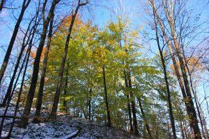Das Lenape Center: eine Neujahrsbotschaft über den Frieden