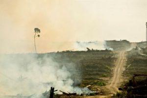 Parlamento Europeo: il divieto di usare olio di palma come biocarburante tutela i diritti umani delle popolazioni indigene