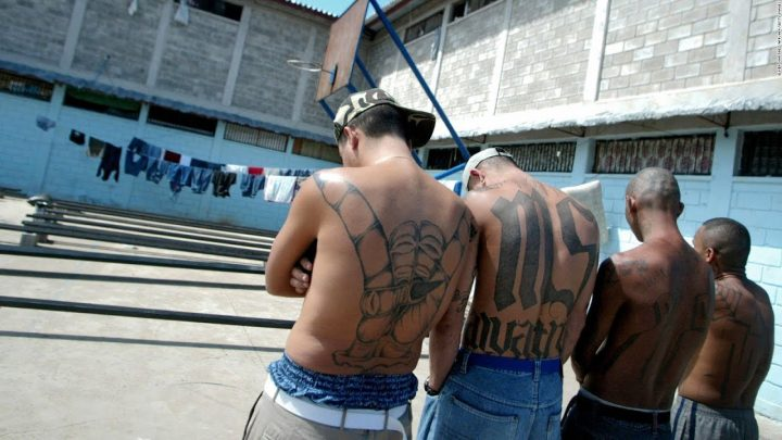 Made in the USA: The Real History of the MS-13 Gang Trump Talked About in State of the Union