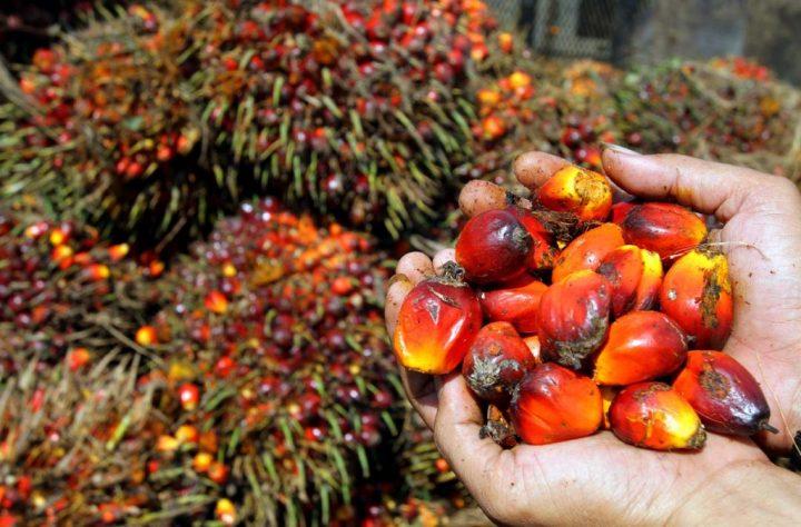Cosa collega l'olio di palma agli aerei da combattimento