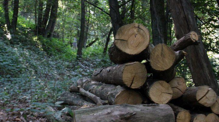 All'assalto dei boschi italiani. Cosa si cela dietro a incendi, biomasse e vergognosi decreti e leggi