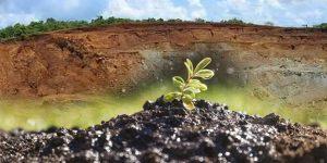 Comunicado de prensa: Verdeciendo las Minas
