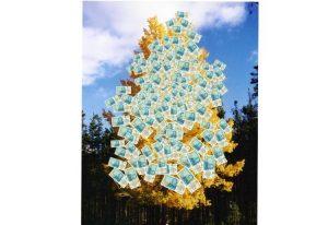 Royaume-Uni : La Forêt de l'Argent Magique
