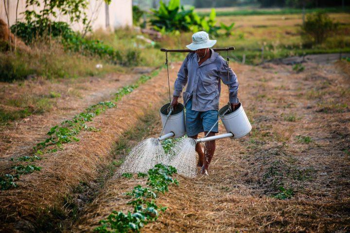 Avança na Câmara Lei da Farra dos Agrotóxicos