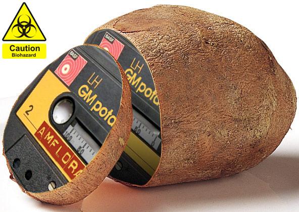 I nuovi OGM non possono sottrarsi alle norme UE