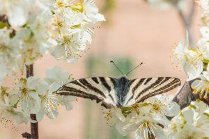 ¿Puede el «efecto mariposa» provocar una nueva recesión económica mundial?
