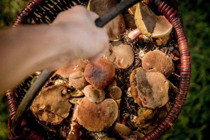 Pilzesammler und Sammlungsbewegungen