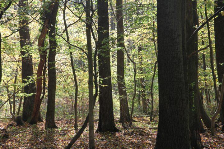 BUND erwirkt Rodungsstopp im Hambacher Wald und fordert von NRW-Regierung morgige Demonstration nicht weiter zu blockieren