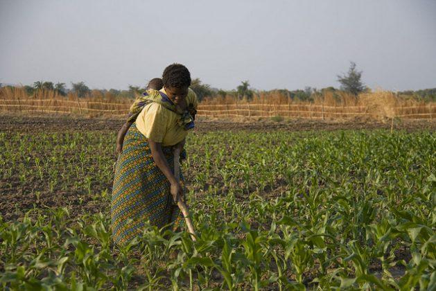 Más mujeres dueñas de tierras para mejorar seguridad alimentaria en África