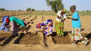 Formazione, alfabetizzazione, agricoltura:  così si crea lavoro in Senegal