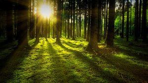 Nasce il Gruppo Unitario per le Foreste Italiane