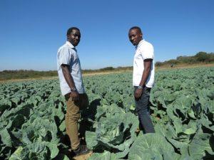 Buscan en África hacer de la agricultura una práctica atractiva