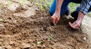 No a la ley «Bayer-Monsanto» de semillas negociada a espaldas del pueblo argentino