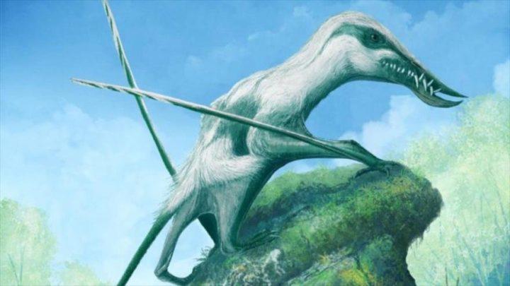 Hallan una nueva especie de 'Pterosaurios' del período Jurásico