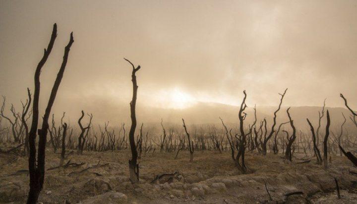 Tierprodukte befeuern globale Erwärmung