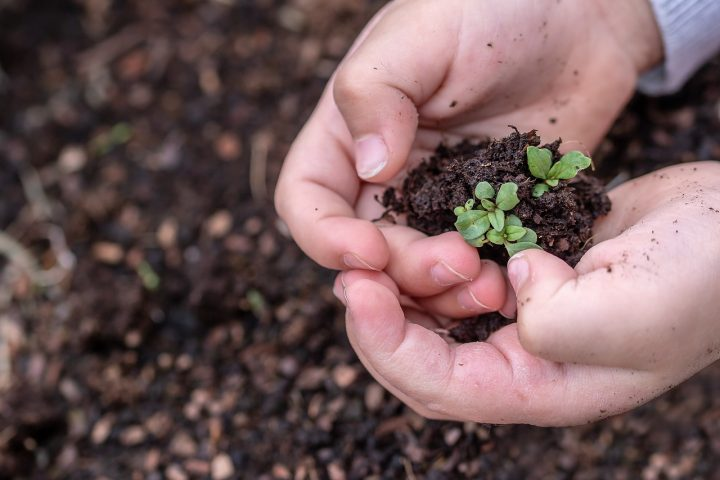A 3 años de su aprobación: La ley de semillas en Venezuela se implementa desde abajo