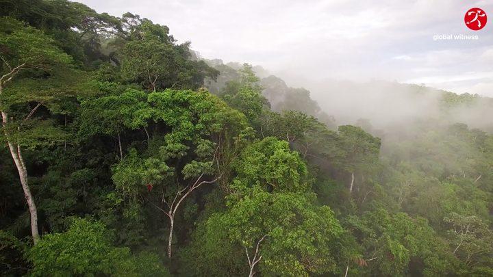 El justiciero forestal
