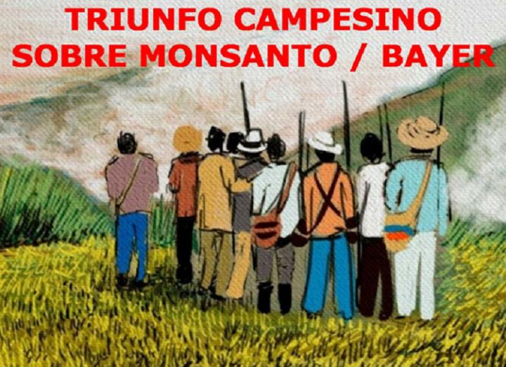 Triunfo campesino sobre Monsanto-Bayer