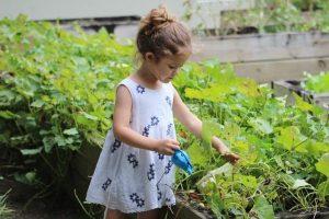 Δωρεάν διάθεση σπόρων παραδοσιακών ποικιλιών – Αναλυτικό Πρόγραμμα