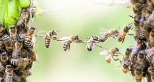 El gobierno estatal de Baviera acepta hacerse cargo de la petición de un referéndum sobre la biodiversidad