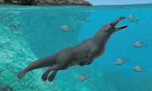Las costas peruanas revelan al eslabón perdido en la evolución de la ballenas