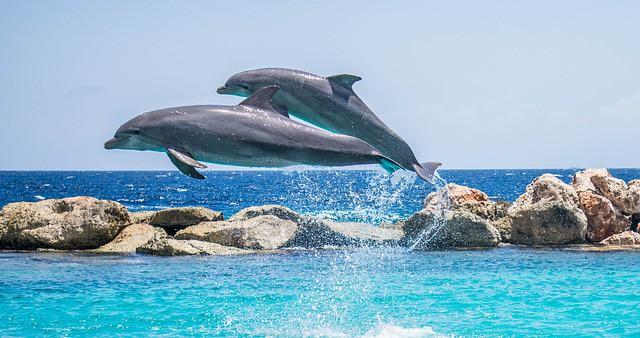 Un millón de especies se enfrentan a la extinción, el mundo está al tanto, según un importante informe de la ONU