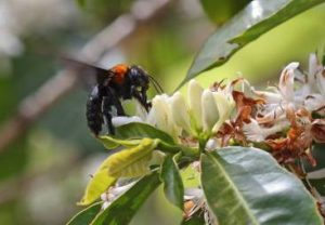 Long Life to Their Majesties, The Bees!