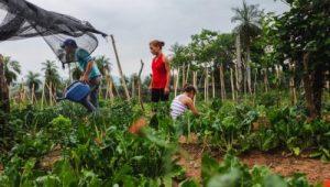 Decenio de las Naciones Unidas para la Agricultura Familiar