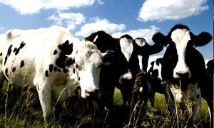 Dopo lo Sciopero per il Clima e le Europee: ricominciamo dalla … carne