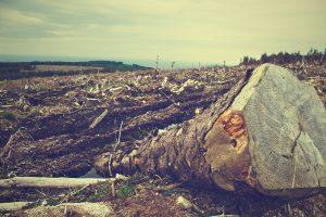La Tierra por Sandra Russo