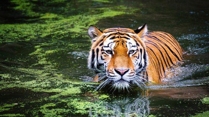 Il declino pericoloso e senza precedenti della Natura