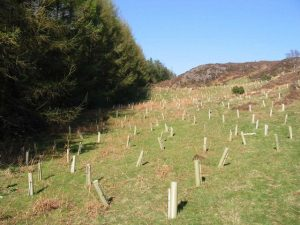Exaggerating how much CO2 can be absorbed by tree planting risks deterring crucial climate action