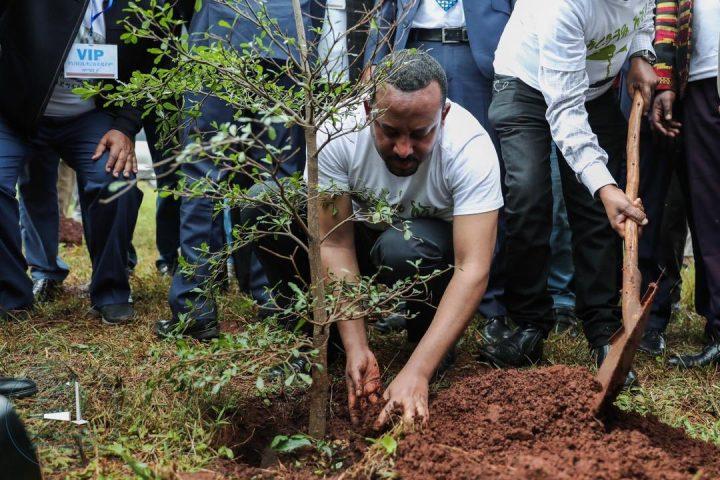 Äthiopien pflanzt 350 Millionen Bäume in zwölf Stunden