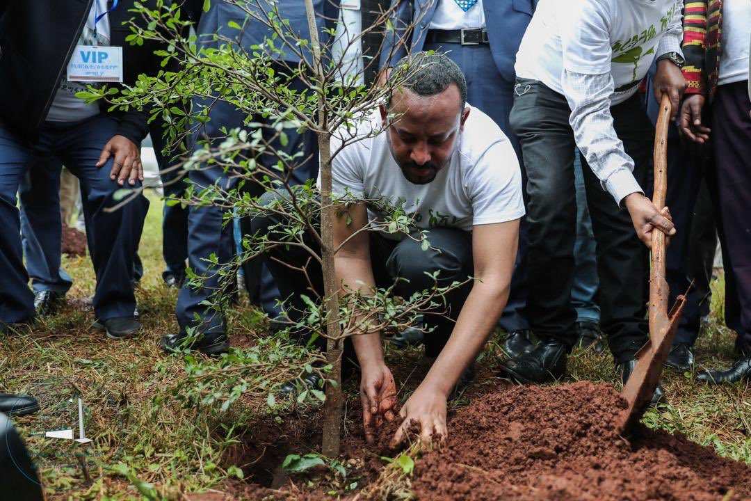 äthiopien Bäume