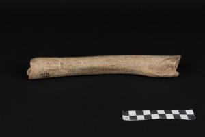 Neandertaler lebten schon vor 120.000 Jahren in Europa