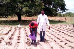 Sénégal : l'agriculture biologique au service de la société