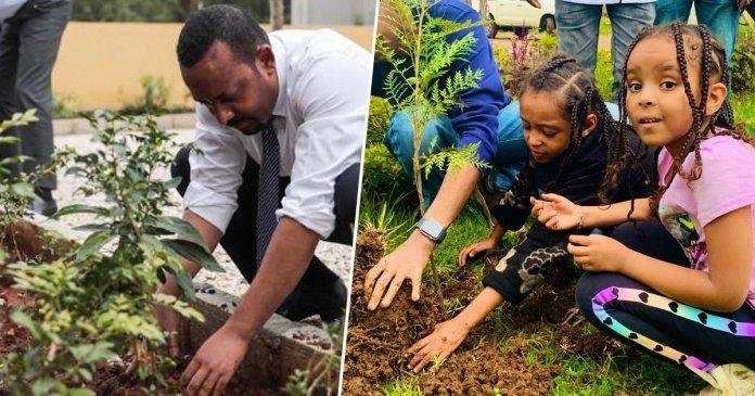 Etiopía planta 350 millones de árboles en un día para enfrentar la crisis climática