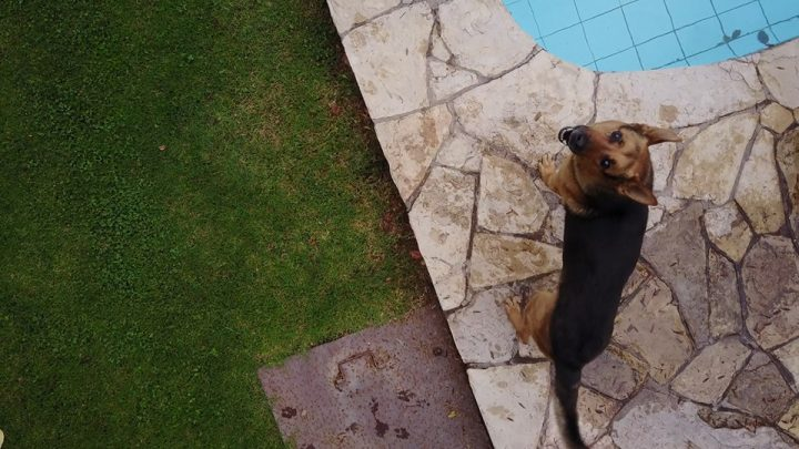 Chile: Cámara de Diputados aprueba a médicos veterinarios como profesionales de la salud