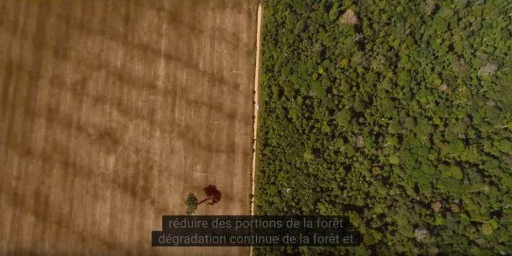 Entenda as queimadas na Amazônia