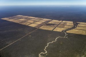 """Greenpeace denuncia nel rapporto """"Foreste al macello"""" la deforestazione del Gran Chaco"""