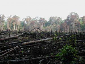 FLR, ovvero le ragioni dell'incendio in Amazzonia, ovvero arrivederci e grazie